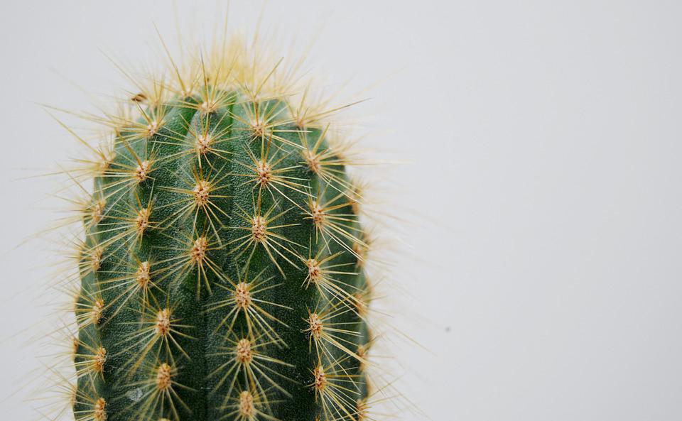 cactus-2262495_960_720-1